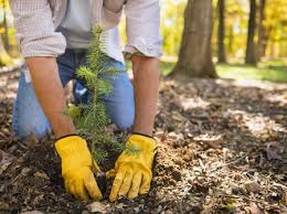 Image result for spring planting
