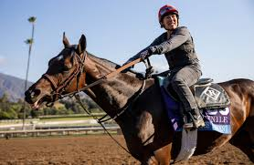 Breeders Cup Charts 2010 Zipse 5 Bold Breeders Cup 2019 Predictions