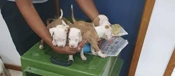Polícia prende 12 pessoas por maus-tratos e tráfico de animais em feira de  filhotes em Caxias