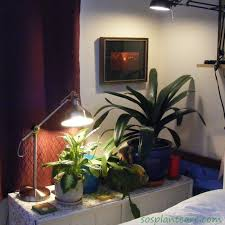 lighting for houseplants. Overhead Spots Lighting For Houseplants N