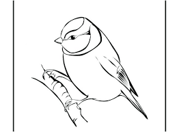 Bird Coloring Pages Realistic Free Printable Birds Angry Games