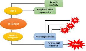 sphingolipids in brain development