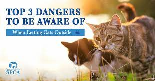 Top 3 Dangers To Be Aware Of When Letting Cats Outside