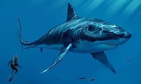 megalodon sharkopedia
