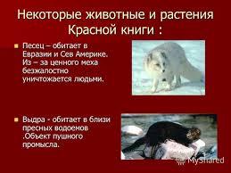 Презентация на тему Красная книга Мы друзья природы Богданова  8 Некоторые