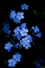 Dark Blue Flower Aesthetic Wallpapers ...