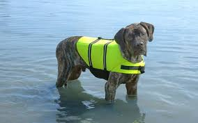 Dog Life Jacket Safety Neon Yellow By Paws Aboard