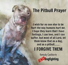 Pitbull Quotes 26 Amazing The 24 Best Pitbull Quotes Images On Pinterest Pit Bull Pit