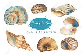 sea shells collection hand drawn watercolor illustration of the under the sea shells