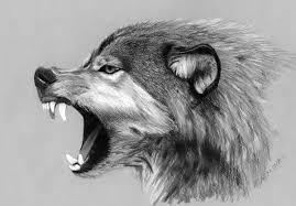 wolf drawing. Beautiful Drawing Wolf Drawing By JasminaSusak  And Drawing