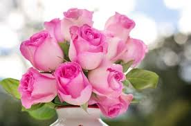 25 pretty pink flowers with names and