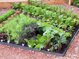 Small Picture Raised beds from HGTV HGTV