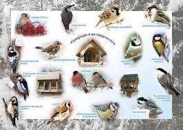 Урок окружающего мира на тему Птицы зимой класс