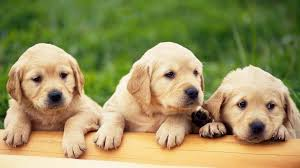 cute animal wallpapers high resolution. Cute Animal Wallpapers High Resolution Hd Cool HD And Pinterest