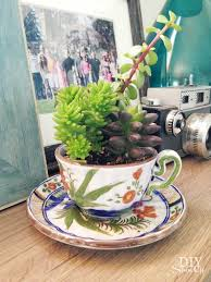 tea cup succulent planters at diyshowoff com
