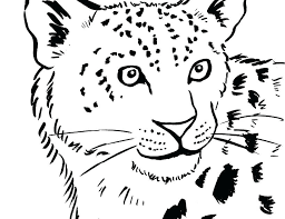 Baby Seal Coloring Pages