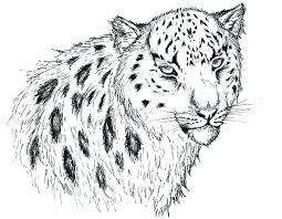 Awesome Snow Leopard Coloring Pages Tintuc247me