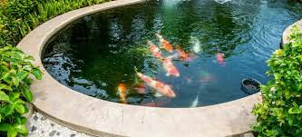 cleaning your garden pond