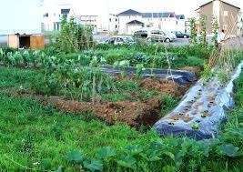 Vegetable Garden Design Layout Modern Ideas Drawing Up A Best ...