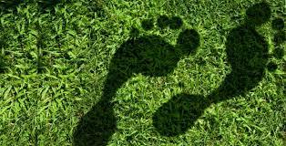 Image result for reduce greenhouse gases emission