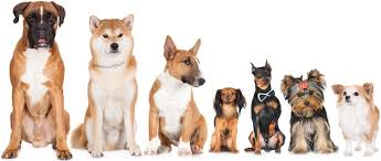 Dog Breed History Chart What Breed Is My Dog How To Identify Any Dog Breed All