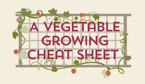 Vegetable Sunlight Requirement Chart A Vegetable Growing Guide Infographic Cheat Sheet