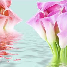Gambar Bunga Untuk Wallpaper Hp