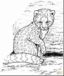 Small Picture Stunning cheetah print coloring pages with cheetah coloring pages