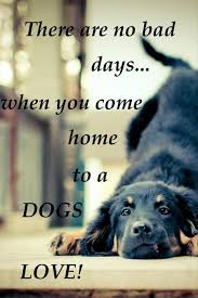 Quotes About Dogs Love Unique 48 Funny Dog Quotes With Images Good Morning Quote