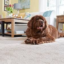 Small Picture Carpet Buying Guide