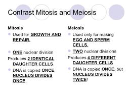 Comparing Mitosis And Meiosis Venn Diagram Compare Mitosis And Meiosis Venn Diagram Barca Fontanacountryinn Com