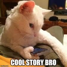 Uninterested Cat - quickmeme via Relatably.com