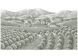 coffee plantation illustration. Delighful Coffee Coffee Plantation Illustration  Google Search For Coffee Plantation Illustration O