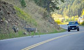 Image result for Animals on the road
