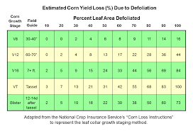 Soybean Hail Damage Chart Corn Hail Damage And Other Storm Issues Mississippi Crop
