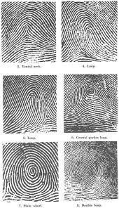 Different Types Of Patterns Unique Science Of Fingerprints Classification And Uses