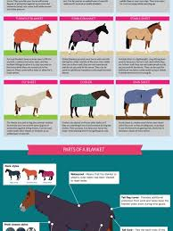 The Complete Guide To Horse Blanketing Visual Ly