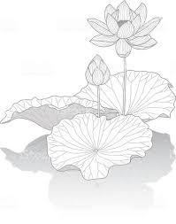 蓮の花 イラストレーションのベクターアート素材や画像を多数ご用意