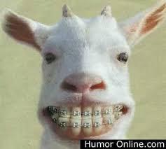 Смешни животни Images?q=tbn:ANd9GcQglaVcQIlf0ED-zuPTizK07JV7TDlGGa46nR-rrMqjZWgEu24BGw