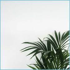 Minimalist Plant Wallpaper ...