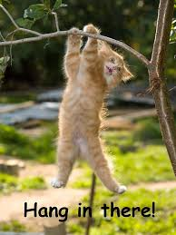 office posters motivational funny. Hang In There Cat Poster - Perfect Funny Motivational For Home Or Office Humorous Posters P