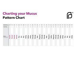 24 Day Menstrual Cycle Chart Pin Auf Adult Life