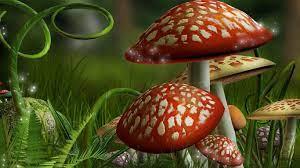 Mushroom wallpaper ...