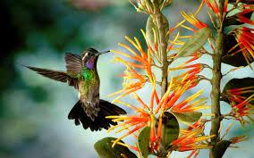 hummingbird live wallpaper screenshot 6