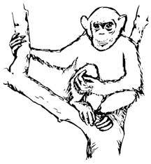 Small Picture Chimpanzee Coloring Pages to go with our Disney movie Chimpanzee