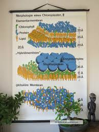 Vintage Pull Down School Wall Chart Of The Structure Of
