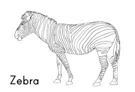 Small Picture Funny Zebra Coloring Page Coloring Pages Coloring Pages Zebra