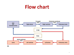 Heart Flow Chart Congenital Heart Disease For Undergraduates Student Uod 2015