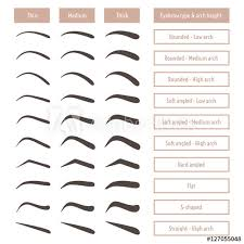 eyebrow shapes various types of eyebrows clic type and other t vector