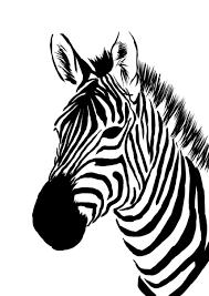 Zebra Print Cricut Zebra Art Animal Stencil Zebra Face